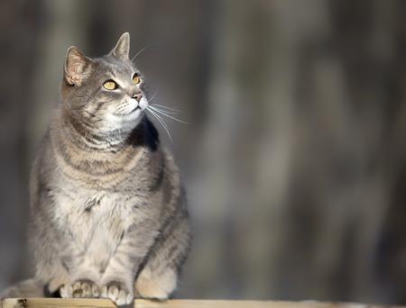 grey tabby: Close up image of a grey tabby cat, looking upward