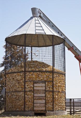 ウィスコンシン州の秋の収穫時にこのトウモロコシのまぐさ桶にトウモロコシの穂軸を充填します。 写真素材