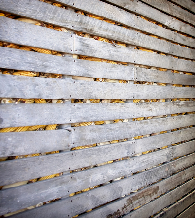 screened: Indoor portion of an old corn crib for storing fall corn harvest. Stock Photo