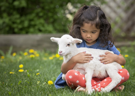 Young, Asian-American girl sitting on the grass holding a baby lamb Archivio Fotografico