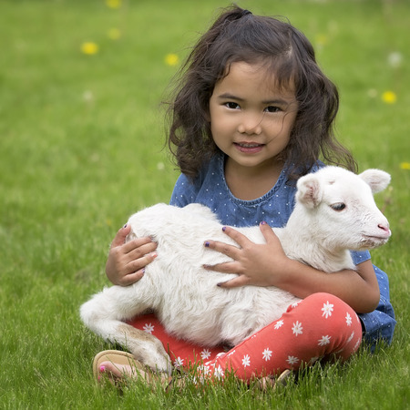Young, Asian-American girl holding a baby lamb