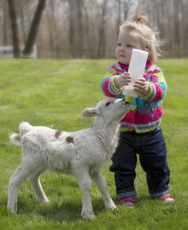 귀여운, 어린 소녀, 고아 Katahdin 양고기를 먹이 병. 스톡 콘텐츠