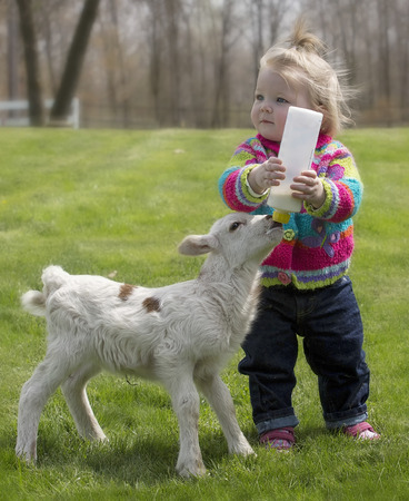 Cute, young girl, bottle feeding orphaned Katahdin lamb. Stock Photo