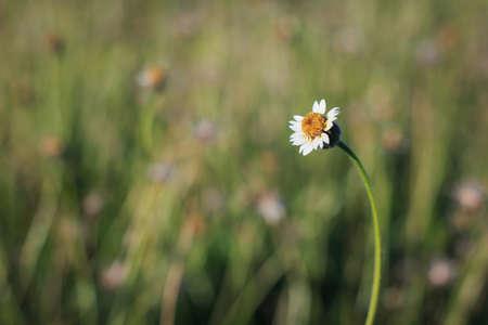 pleasantness: Grass flower