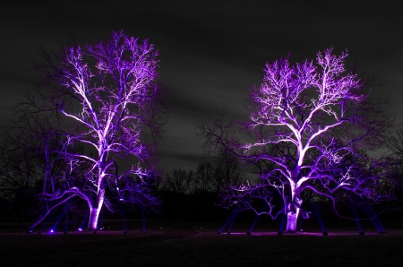 Trees at night illuminated by LED lights