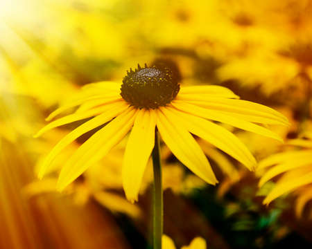 Yellow flower in sunshine photo