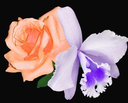 Rosa e Orquídea