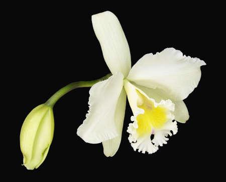 Orquídeas los preto