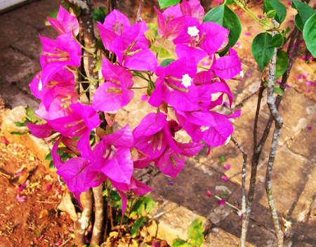 primavera:                                Buqu� de primavera
