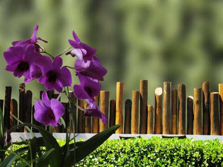 tabique: Tabique de madera para jard�n Foto de archivo