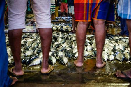 Frisch gefangener Thunfisch nur in auf dem Fischmarkt in Sri Lanka Matare gebracht