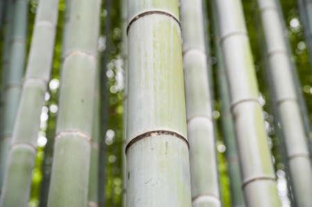 Bamboo closeup Bambus-Wald in der Nähe von Kyoto Japan