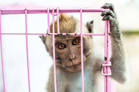 captivated: Monkey in a cage Stock Photo