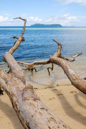 열 대 해변에서 죽은 나무 타락
