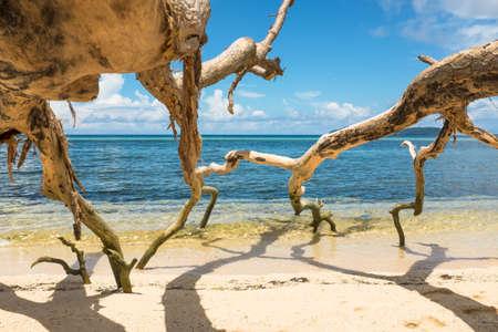 열대 모래 해변에 쓰러진 나무