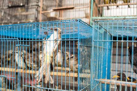 Vogel in einem Käfig auf einem Vogelmarkt
