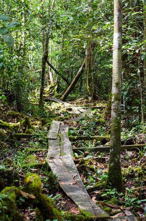Pfad durch den Dschungel von Kalimantan, Indonesien Lizenzfreie Bilder