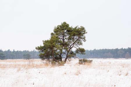Baum in der niederländischen Winterlandschaft