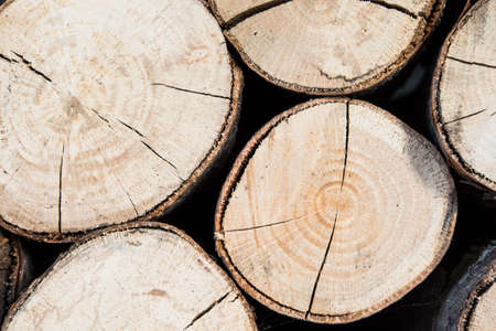 timberland: Close-up of cut tree trunk