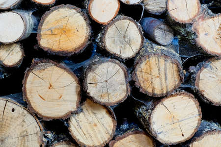 Close up of cut tree trunk