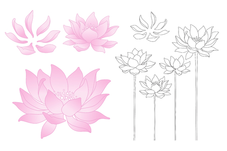 flower petals: Vector lotus flowers and petals isolated illustration