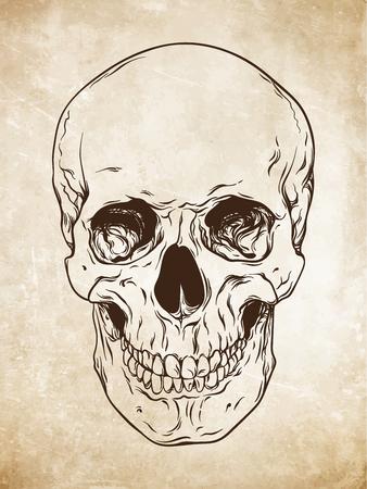 Hand drawn line art human skull. Da Vinci sketches style over grunge aged paper background vector illustration