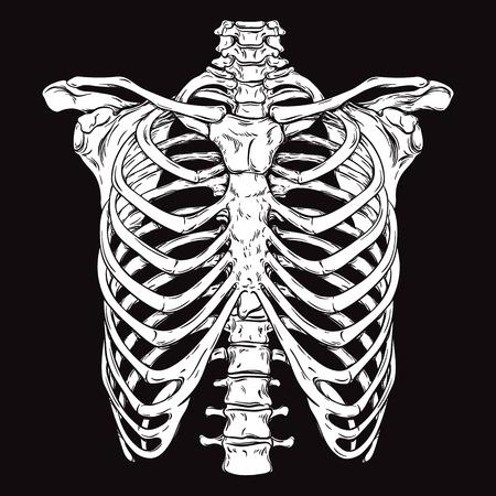 Hand drawn ligne art ribcage humain anatomiquement correcte. Blanc sur fond noir illustration vectorielle. conception d'impression pour t-shirt ou costume d'Halloween