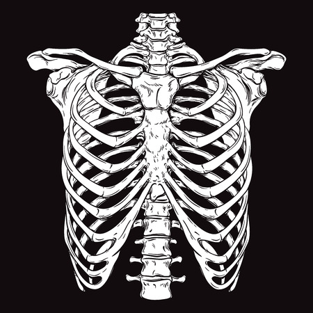 Hand drawn line art anatomically correct human ribcage. White over black background vector illustration. Print design for t-shirt or halloween costume