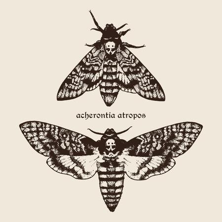 ロゴベクトルの手には、死亡頭鷹蛾図が描画されます。署名は種のラテン系の名前  イラスト・ベクター素材