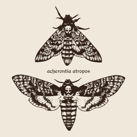 Vector hand drawn Deaths head hawk moths illustration. Signature is the Latin name of the species