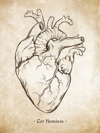Hand drawn line art anatomically correct human heart. Da Vinci sketches style over grunge aged paper background. Vintage tattoo design vector illustration. Enscription is latin term of human heart