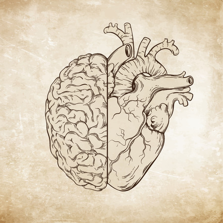aged paper: Hand drawn line art human brain and heart. Da Vinci sketches style over grunge aged paper background vector illustration. Logic and emotion priority concept.