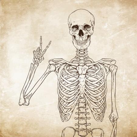 esqueleto: posando esqueleto humano sobre la ilustración de papel viejo del grunge vector de fondo