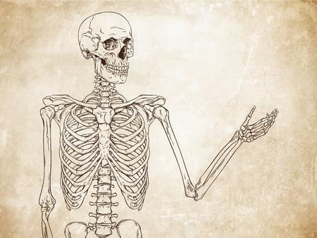 old grunge paper: Human skeleton posing over old grunge paper background vector illustration