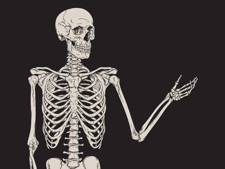 esqueleto humano que presentan aisladas sobre fondo negro ilustración vectorial