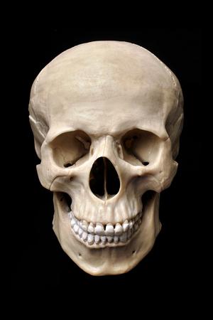 anatomically: Anatomically correct human skull model isolated on black background.