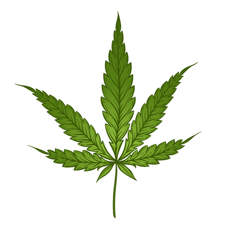 Medical marijuana green leaf isolated over white background. Cannabis vector illustration Фото со стока - 75910740