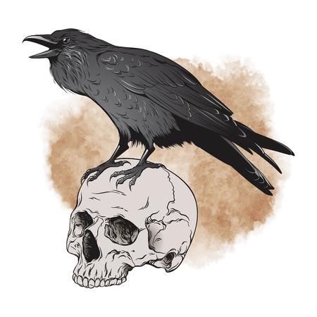 Raven and skull on sepia background vector illustration.
