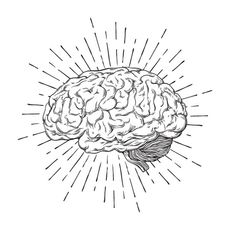 Hand drawn human brain Vectores