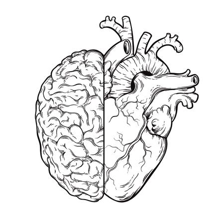 Hand gezeichnete Linienkunst menschliches Gehirn und Herzhälften - Logik- und Emotionsprioritätskonzept. Druck- oder Tätowierungsentwurf lokalisiert auf weißer Hintergrundvektorillustration