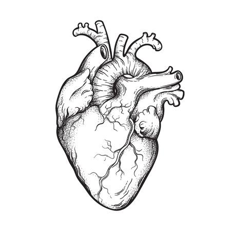 Linea arte disegnata a mano anatomicamente corretta e dotwork del cuore umano. Flash tattoo o print design illustrazione vettoriale