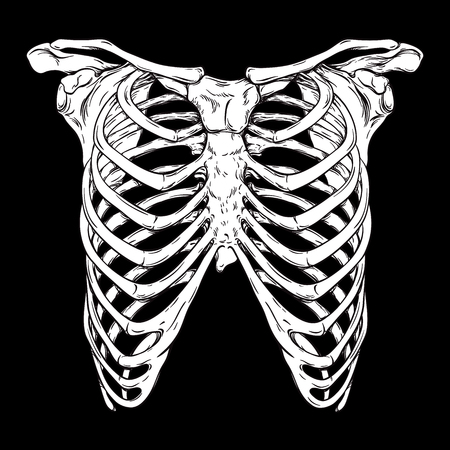Human ribcage hand drawn line art anatomically correct. White over black background vector illustration. Print design for t-shirt or halloween costume
