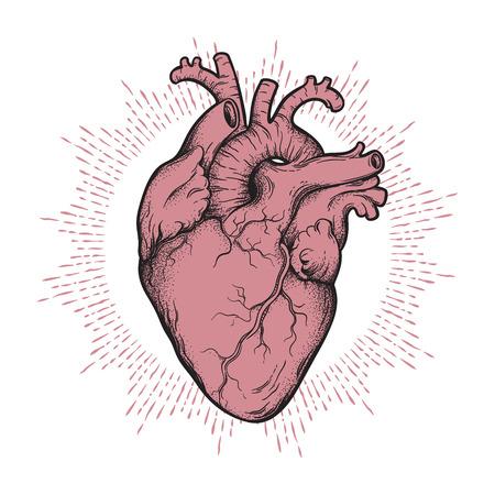 Anatomisch korrekte handgezeichnete Strichzeichnung und Punktarbeit des menschlichen Herzens. Flash-Tattoo oder Druckdesign-Vektorillustration