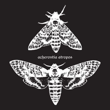 Deaths head hawk moths hand drawn dot work vector illustration. Signature is the Latin name of the species Иллюстрация