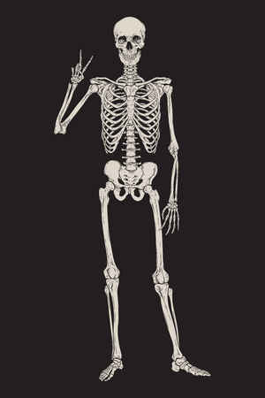Human skeleton posing isolated over black background vector illustration. Hand drawn gothic style placard, poster or print design Stock fotó - 123978448
