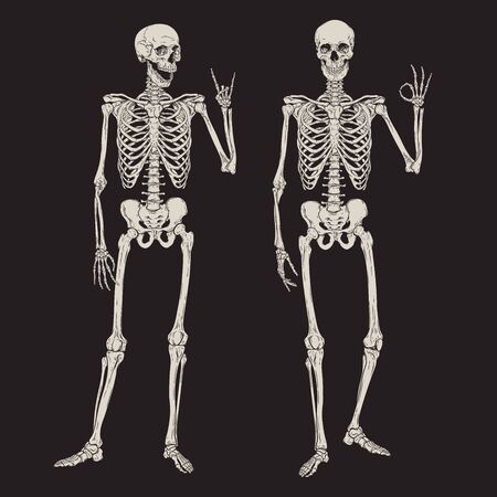 Human skeletons posing isolated over black background vector illustration. Hand drawn gothic style placard, poster or print design Ilustração
