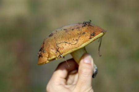 fungus in hand Stock Photo