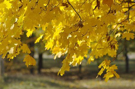 sunny day in autumn