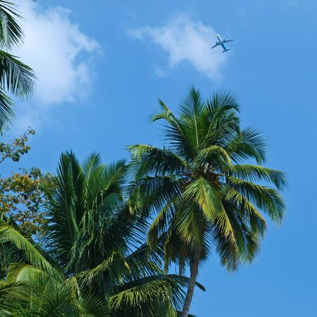 Palm and plane