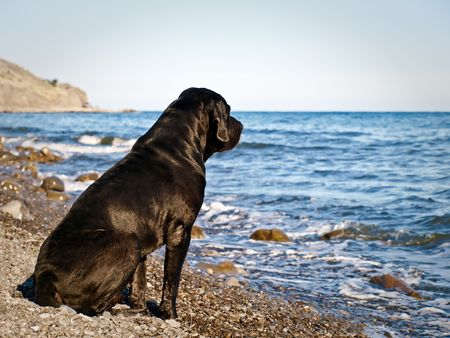 Black dog on a beach
